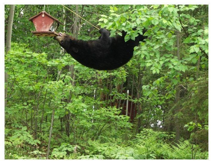 Bird_feeder_bear_3