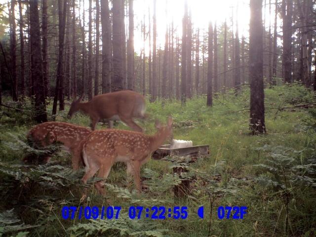 Field_Camera_113_2