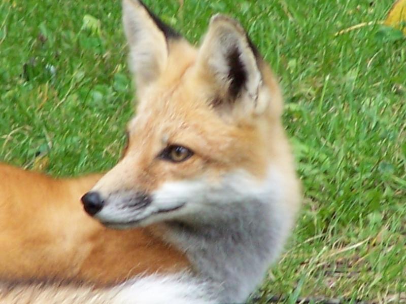 Foxy_Lady_008