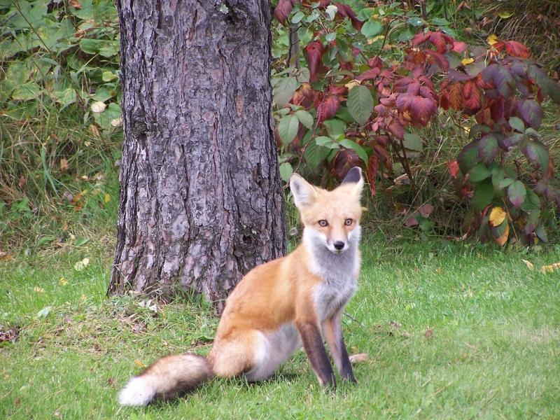 Foxy_Lady_003