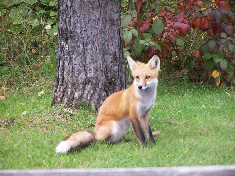 Foxy_Lady_004
