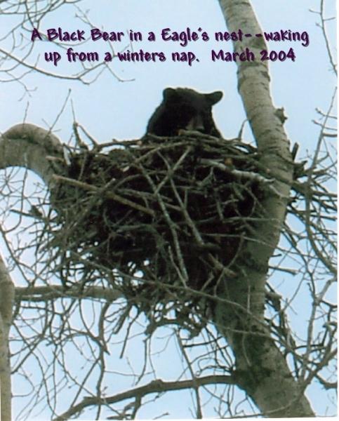bear_march_2004