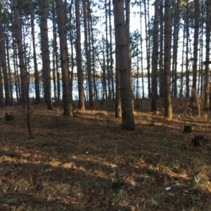 Darrow-Pine-Plantation-Today