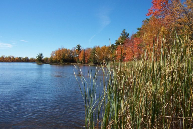 fall-grass-water